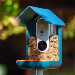 bird buddy: a smart bird feeder