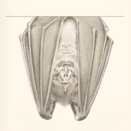 bats and the origin of outbreaks